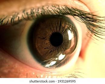 Macro shot of human eye