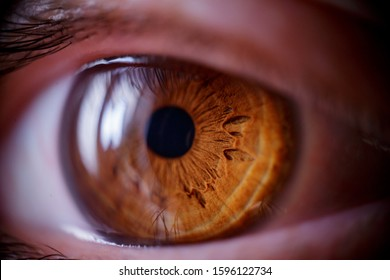 Macro shot of the human eye. Brown eyes near. Soft focus. The reflection of the window in the human eye