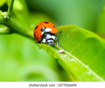 Macro shot of a ladybird on a leaf