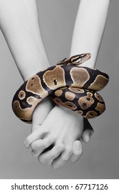 Macro shot of man and woman holding each others hands, which are connected with royal python snake- metaphore for adam and eve tempted in paradise; grey background, a lot of copyspace available