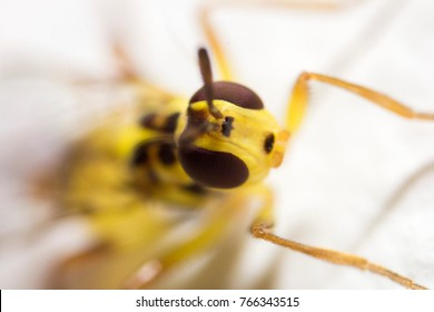 macro shot of a mason wasp