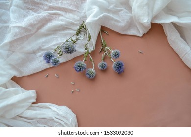 Macro shot photo of natural cotton muslin, dry blue eryngium planum and violet lavender flowers on soft pink background. Texture of white gauze fabric. Cheesecloth art concept composition clipart