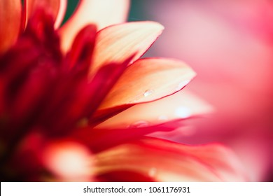 Macro shot of a pink flower - abstract details