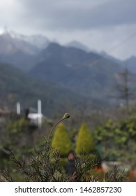 Macro Shot of a plant with hills of kasol in background
