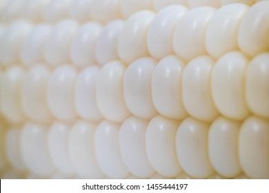 macro shot of pure white corn seed, hokkaido famous sweet corn that can eat fresh