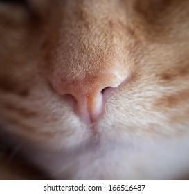 macro shot of a red cat nose