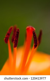 Macro shot of a red flower