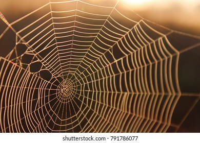 Macro Shot of a Spider Web in the Sunshine Background Texture for Website Design.