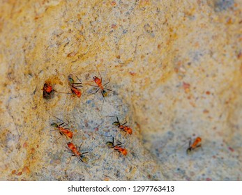 a macro shot of spinifex termites entering and exiting a cathedral termite mound in australia's northern territory