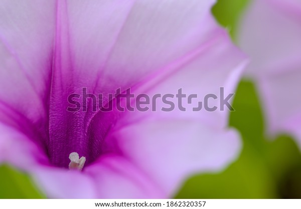 macro-shot-stigma-purple-beach-600w-1862