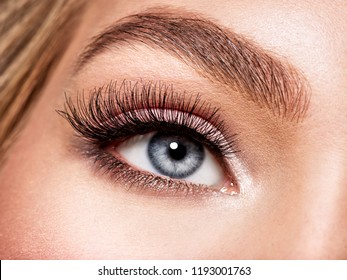 Macro Shot of Young  Woman's Beautiful Eye. Elegance CloseUp of Female Eye with Classic MakeUp. Beauty, Cosmetics and Makeup. Brown Eyeshadow on Eyelid