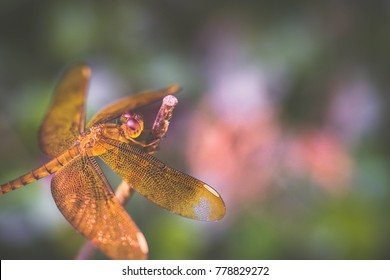 Macro shots, Beautiful nature scene dragonfly. Showing of eyes and wings detail.