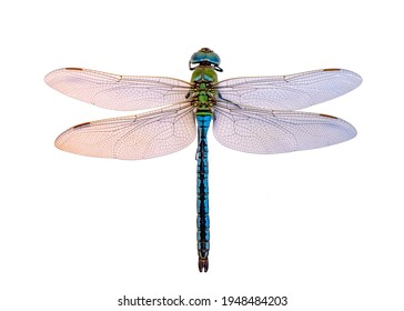 Macro shots, dragonfly and wings detail. Beautiful dragonfly isolated on a white background