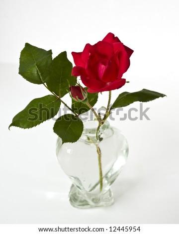 Macro Single Red Tea Rose Bud Stock Photo Edit Now 12445954