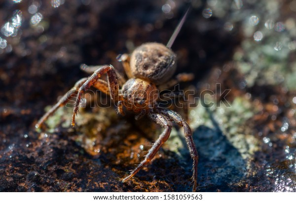 A macro of a small wolf spider on a rock in Sheffield, UK