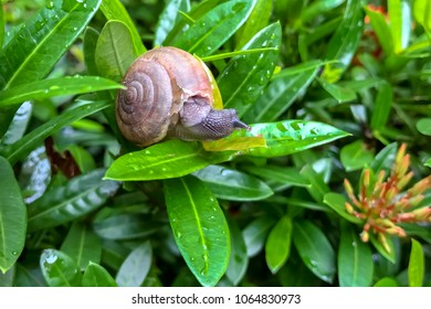 Macro snail on green leaves, bushes, flowers. Broken snail shell. Concept nature, sluggish.