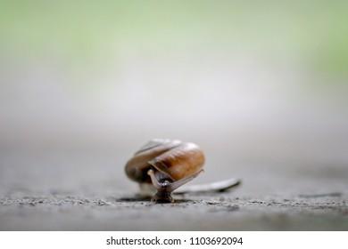 macro snail walker