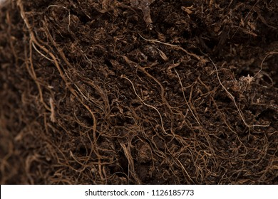 Macro soil texture with small plant roots, growing plants and gardening concept