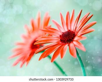 macro of some beautiful flowers