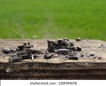 Macro of some invertebrates found underneath a board