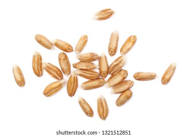 Macro spelt grain isolated on white background, top view