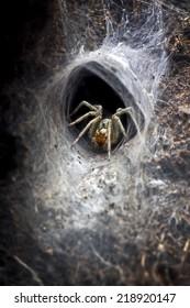 Macro of spider