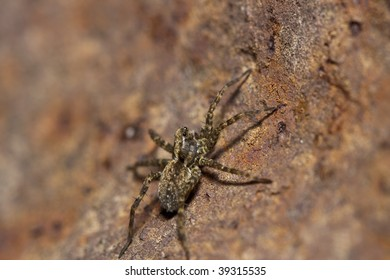 macro of a spider on a rock