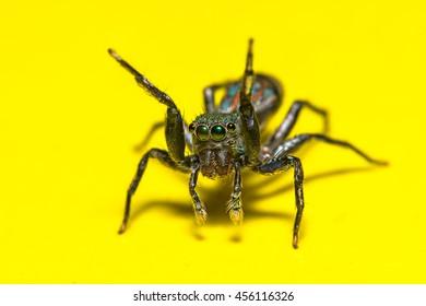macro spider (soft focus)