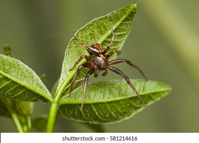 Macro of spider under tree leaves over green background