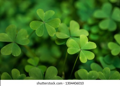 Lucky Four Leaf Clover//Good Luck Party Table Top Confetti//Decor-Shades of Green