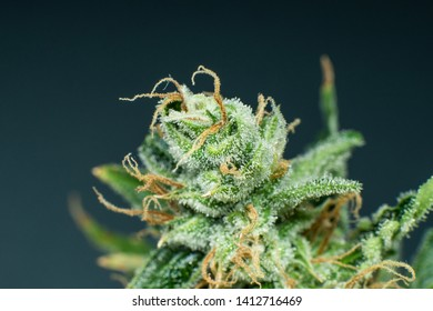 Buds Sativa Images, Stock Photos & Vectors | Shutterstock