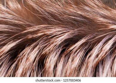 Macro view of brown fur. Close up