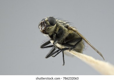 Macro view of fly insect close up