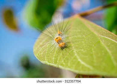 Macro view of a furry caterpillar on a leaf