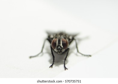 Macro view of nature fly machine on white background in front position