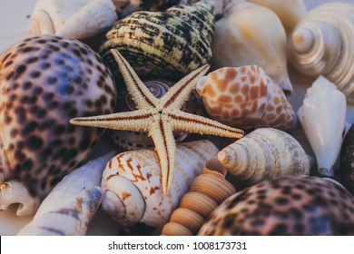 Macro view of seashells background. Starfish on seashells background. Many different seashells texture and background for designers. Natural seashell collection.