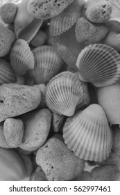 Macro view of seashells. Seashell background. Texture of black and white seashells. Abstract texture and background for designers.