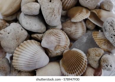 Macro view of seashells. Seashell background. Texture of seashells. Abstract texture and background for designers.