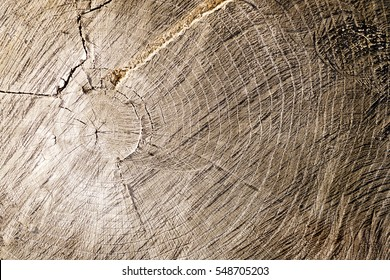 Macro view of smooth, warm, flat wood texture. Annual rings of tree stump cut decomposing outside.