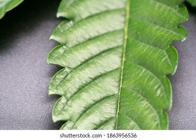 Macro View of the Top Side of a Cannabis Leaf