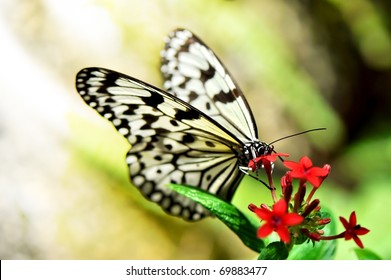 Macro view of a wonderful butterfly spreading wings and eating on a colorful flower.