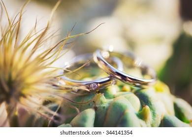 Macro wedding rings