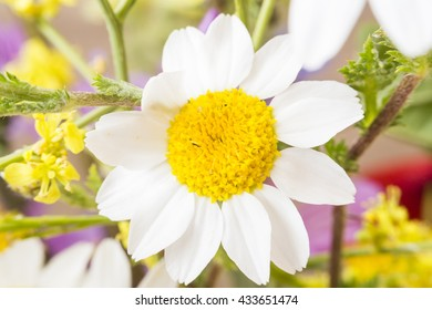 macro of white flowers in spring on a wooden table