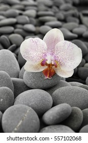 Macro of white orchid and pile of gray stones