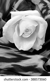 Macro white rose on background with leopard motif in black and white, flower