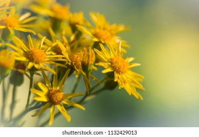 Macro of wild and yellow flowers live on a meadow
