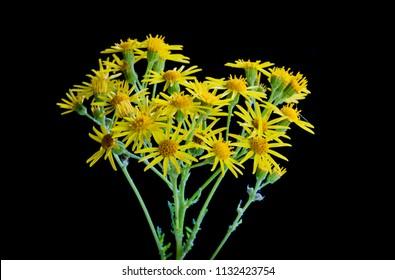 Macro of wild and yellow summer flowers