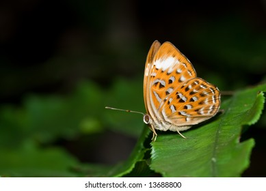 Macro/close-up shot of a butterfly