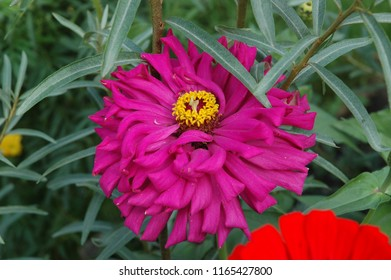 Pink flower yellow centre images stock photos vectors shutterstock macro shot a head big pink flower with yellow center on blur green background mightylinksfo