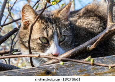 Macroshot of a young cat in the sun looking among branches and buds